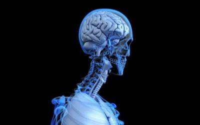 Des chercheurs découvrent un potentiel médicament contre le cancer du cerveau